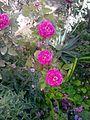Garden's.jpg