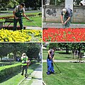 Gardener (Serbia).jpg