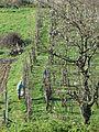 Garfagnana 2009 02.jpg