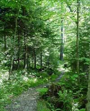 Gaudineer Scenic Area - Hiking trail in Gaudineer Scenic Area.