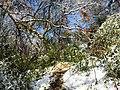 Georgia snow IMG 4776 (38061035625).jpg