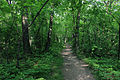 Gfp-wisconsin-lapham-peak-state-park-hiking-path.jpg