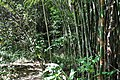 Going back past the bamboo thicket (11967081355).jpg