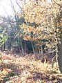 Golden Winter on Holmbury Hill - geograph.org.uk - 1094264.jpg