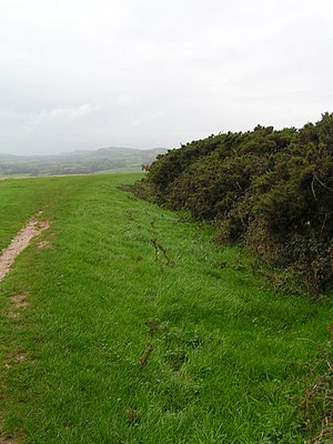 Brenscombe Heath - Image: Gorse on Brenscombe Hill geograph.org.uk 268670