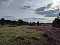 Gräser und Heide.jpg