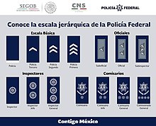 Law Enforcement Ranks >> Federal Police Mexico Wikipedia