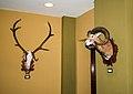 Grand Hotel Galya, trophies of red deer and mouflon.jpg