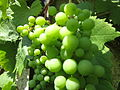 Grapes (7566194404).jpg