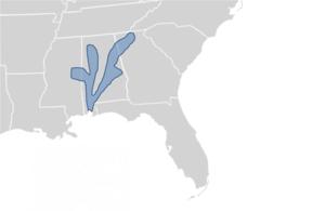 Alabama map turtle - Image: Graptemys pulchra map