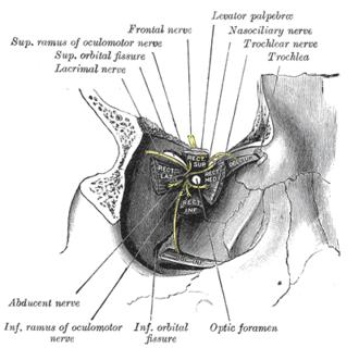 Trochlea of superior oblique - Image: Gray 787