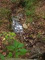 Green Spring Gardens Park - rivulet from stream.JPG