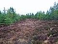 Greshornish Forest - geograph.org.uk - 1712793.jpg