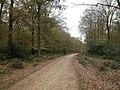 Gritnam Wood, cycleway - geograph.org.uk - 1570901.jpg