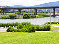 Guanshan Riverside Park Grass and Minquan Bridge 20110911.jpg