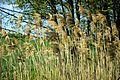 Gumping Naturdenkmal Wiesenparzelle 3.jpg