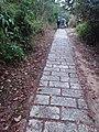 HK 西貢 Sai Kung District hiking Ma On Shan Country Park Pak Sha Wan Sam Sing Wan Pak Ma Tsui February 2021 SSG 03.jpg