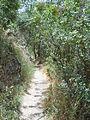 Hadassah trail 1.JPG