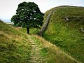Hadrian's Wall footpath Sycamore Gap - geograph.org.uk - 907861.jpg
