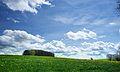 Hagenheim-Wiese-mit-Waldinsel.jpg
