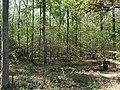 Hambach forest 58.jpg