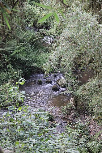 Bale Mountains National Park - Stream in the park.