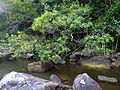 Hawkesbury River 20.jpg