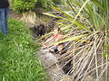 Heathcote - spot the kids.jpg