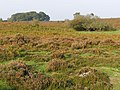 Heathland at Furzy Brow, New Forest - geograph.org.uk - 260904.jpg