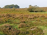 File:Heathland at Furzy Brow, New Forest - geograph.org.uk - 260904.jpg