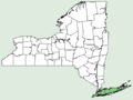 Helianthus angustifolius NY-dist-map.png
