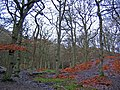 Helm Wood - geograph.org.uk - 99958.jpg