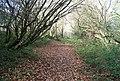 High Weald Way through the woods - geograph.org.uk - 1056474.jpg