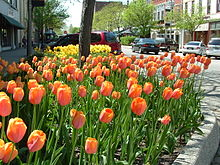1929 : First Holland Tulip Time Festival Held