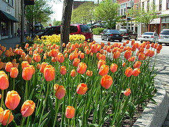Holland, Michigan - Tulip beds in downtown