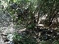 Holly Jim Trail - panoramio (12).jpg