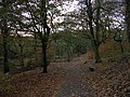 Hopwood Clough - geograph.org.uk - 86830.jpg