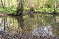 Horn-Bad Meinberg - 2015-05-10 - LIP-028 Silberbachtal mit Ziegenberg (29).jpg