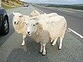 Horseshoe Pass - geograph.org.uk - 74374.jpg