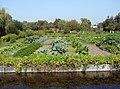 Hortillonnages d'Amiens Jardins maraîchers 190908 02.jpg