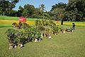 House Plant Show - Agri-Horticultural Society of India - Alipore - Kolkata 2013-11-10 4464.JPG