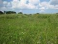 Hryhorivka, Kyivs'ka oblast, Ukraine, 07550 - panoramio (7).jpg