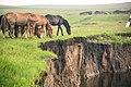 Hulunbuir Grasslands, Inner Mongolia - 9758870183.jpg