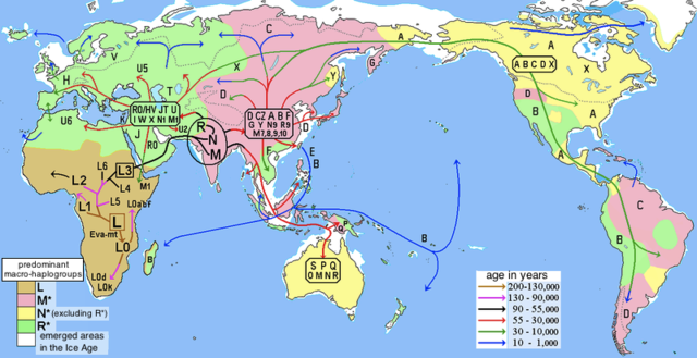 Early modern human migrations based on the distribution of mitochondrial haplogroups.