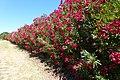 I Colori dell'estate - panoramio.jpg