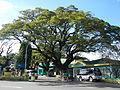 Infanta,Pangasinanjf0262 16.JPG