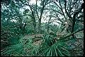 Inland forests at Cumberland Island National Seashore, Georgia (0ace61bd-2f72-460b-857b-73cce07d00b2).jpg
