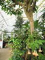 Interior view - Talcott Greenhouse - Mount Holyoke College - DSC04508.JPG