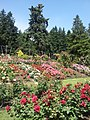 International Rose Test Garden, Oregon (2013) - 3.jpeg