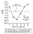 Intramolecular glucose carbon Isotopes from tree rings.png
